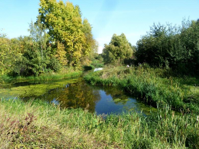 в пойме реки Городня