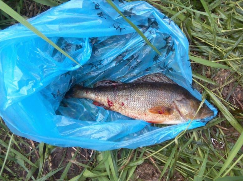 рыбалка на Уче